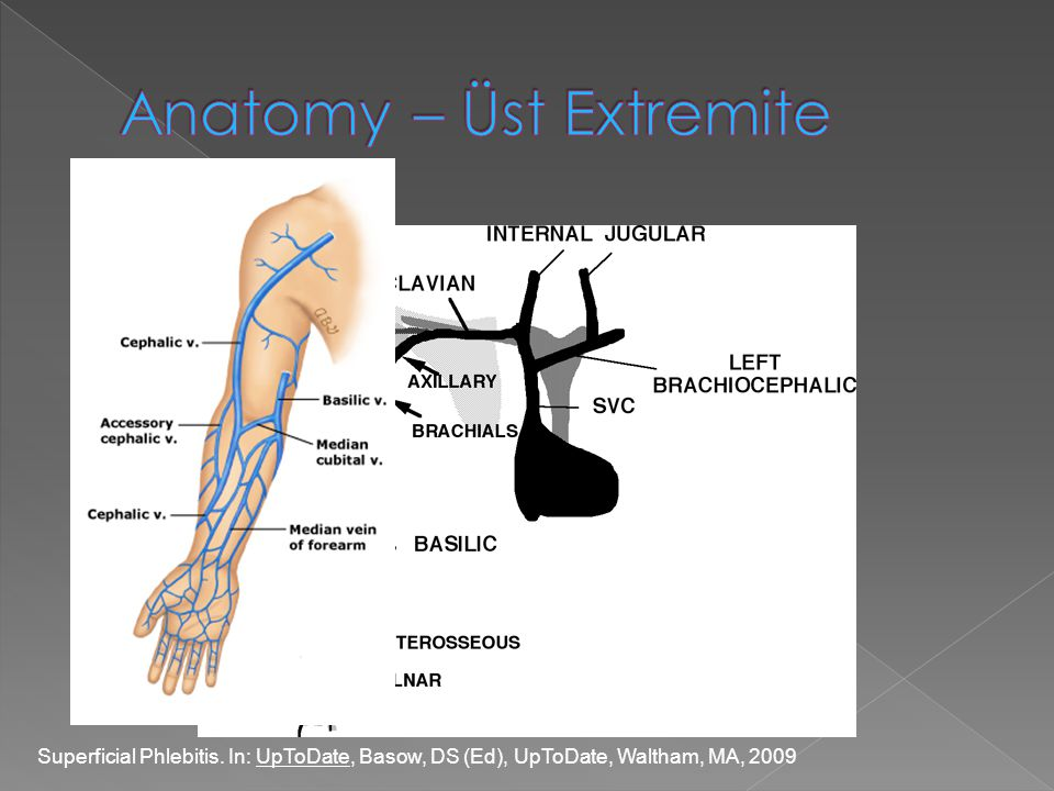 Anatomy – Üst Extremite