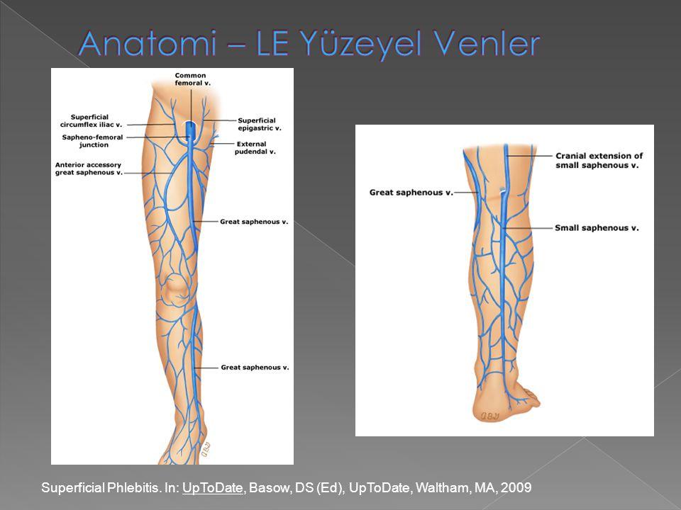 Anatomi – LE Yüzeyel Venler