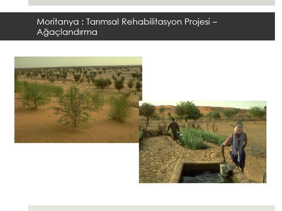 Moritanya : Tarımsal Rehabilitasyon Projesi – Ağaçlandırma