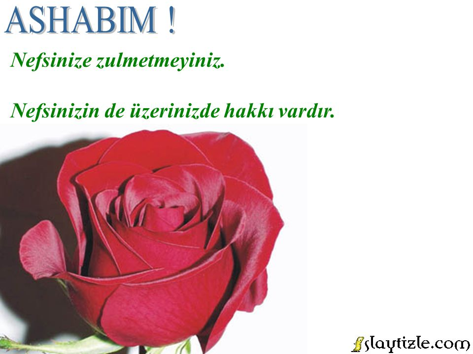 ASHABIM ! Nefsinize zulmetmeyiniz.