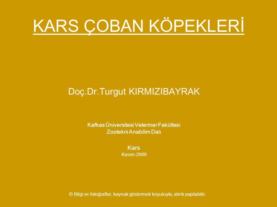 KARS ÇOBAN KÖPEKLERİ Doç.Dr.Turgut KIRMIZIBAYRAK Kars