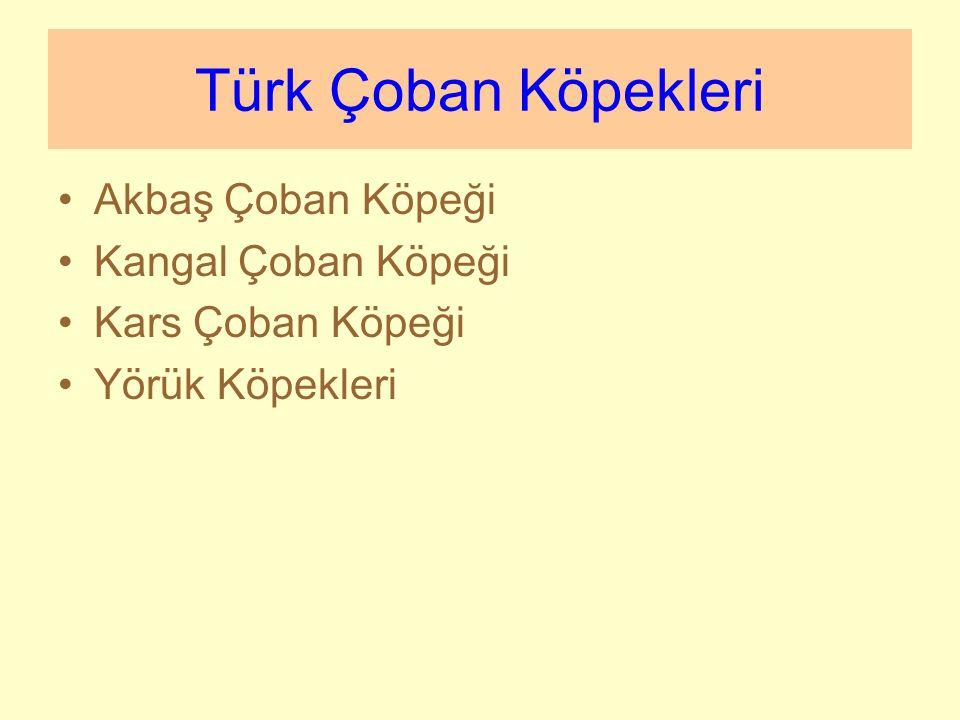 Türk Çoban Köpekleri Akbaş Çoban Köpeği Kangal Çoban Köpeği
