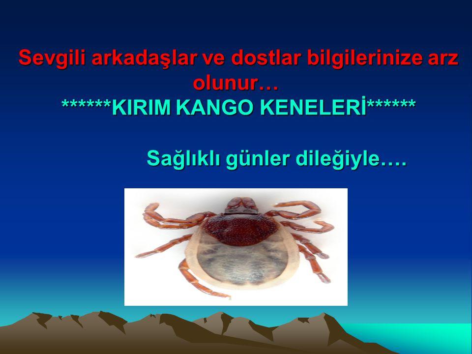 ******KIRIM KANGO KENELERİ******