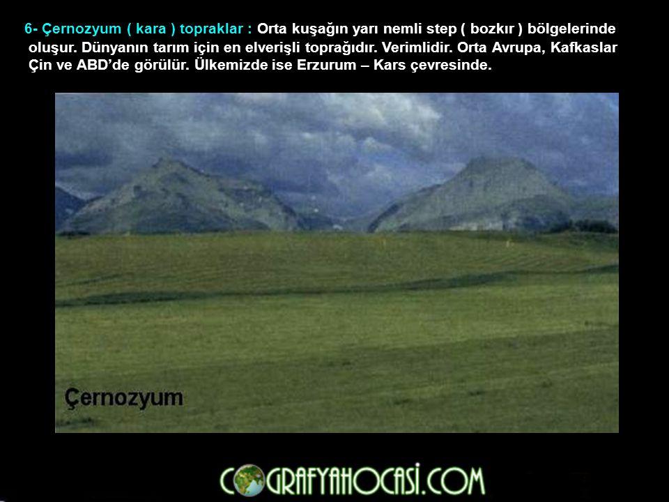 6- Çernozyum ( kara ) topraklar : Orta kuşağın yarı nemli step ( bozkır ) bölgelerinde