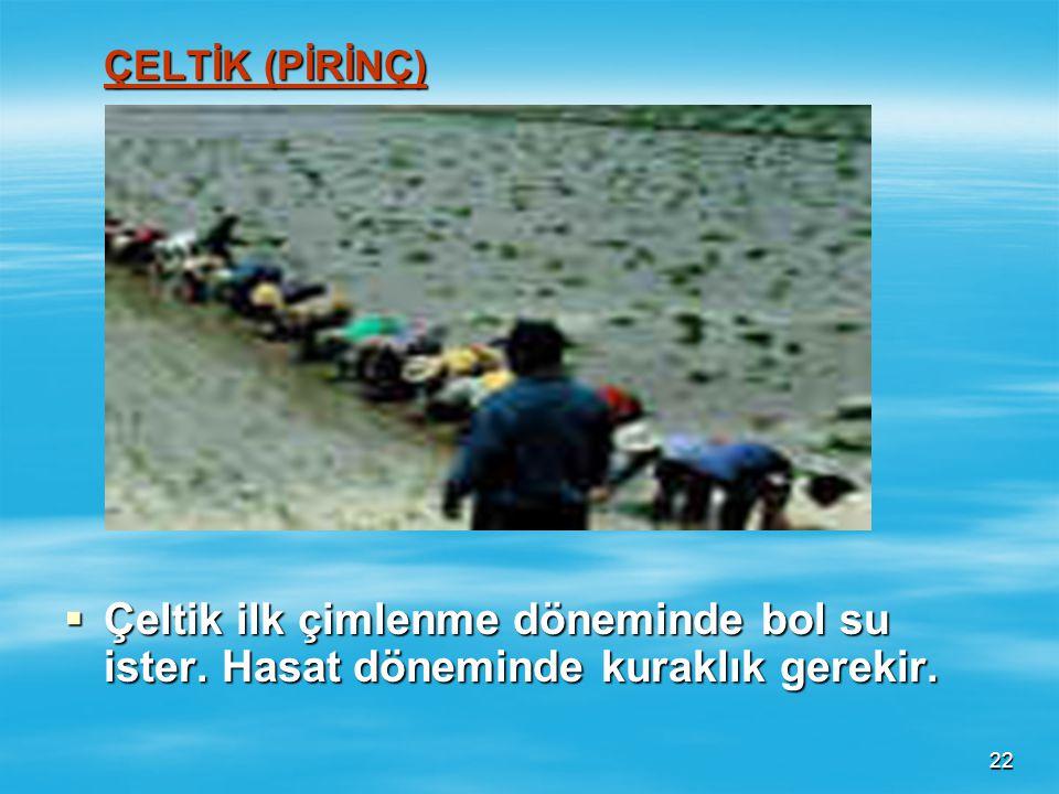 ÇELTİK (PİRİNÇ) Çeltik ilk çimlenme döneminde bol su ister. Hasat döneminde kuraklık gerekir.