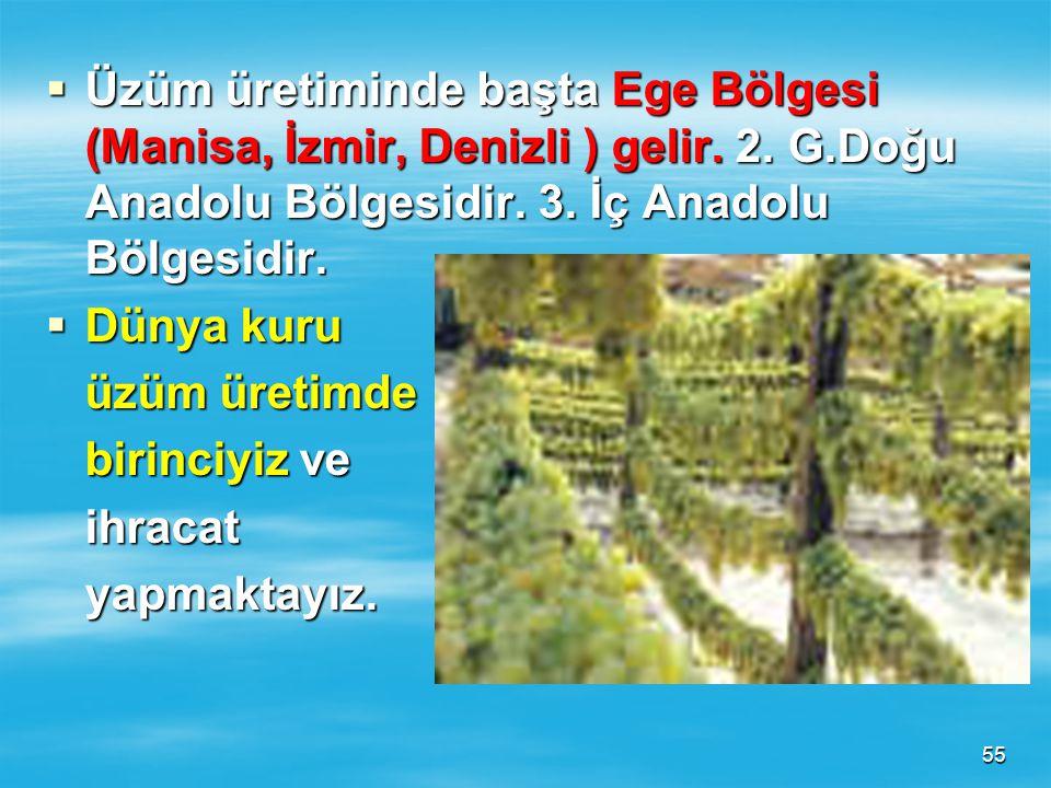 Üzüm üretiminde başta Ege Bölgesi (Manisa, İzmir, Denizli ) gelir. 2. G.Doğu Anadolu Bölgesidir. 3. İç Anadolu Bölgesidir.