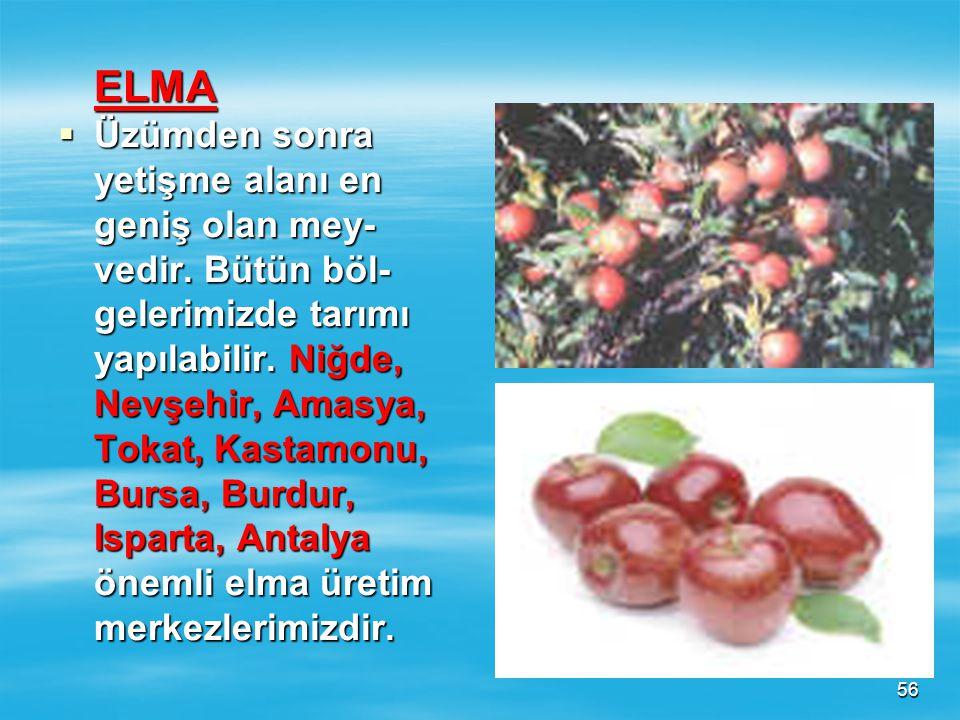 ELMA Üzümden sonra. yetişme alanı en. geniş olan mey- vedir. Bütün böl- gelerimizde tarımı. yapılabilir. Niğde,