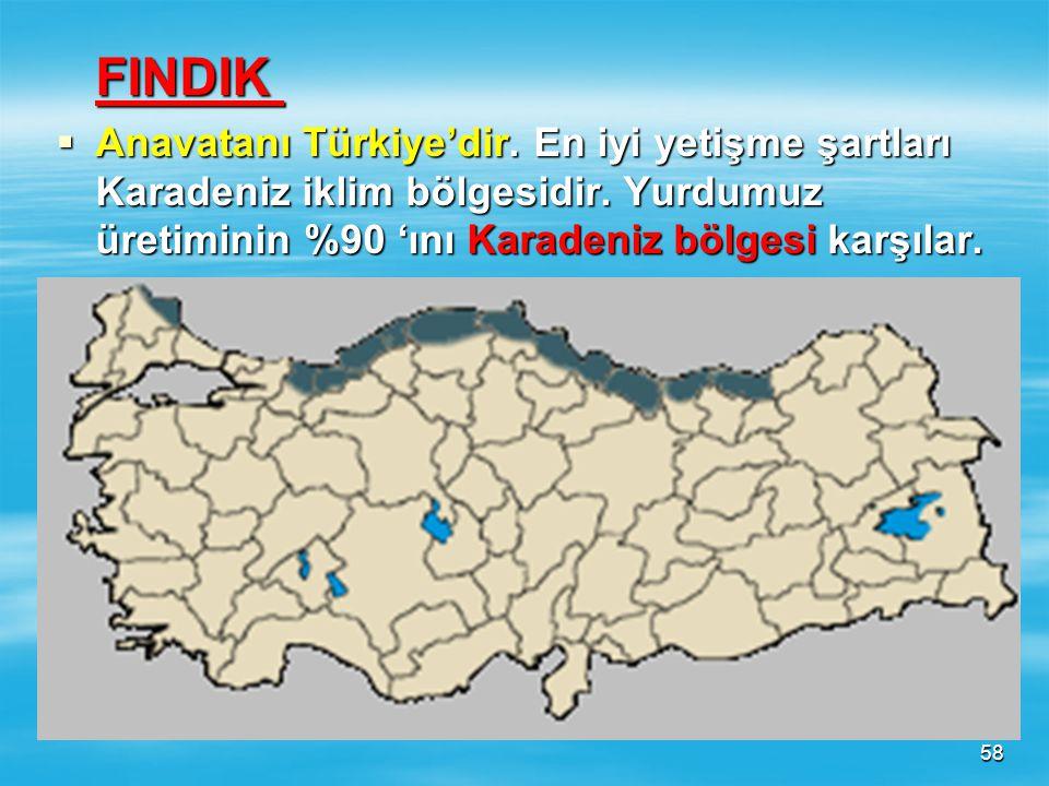 FINDIK Anavatanı Türkiye'dir. En iyi yetişme şartları Karadeniz iklim bölgesidir.