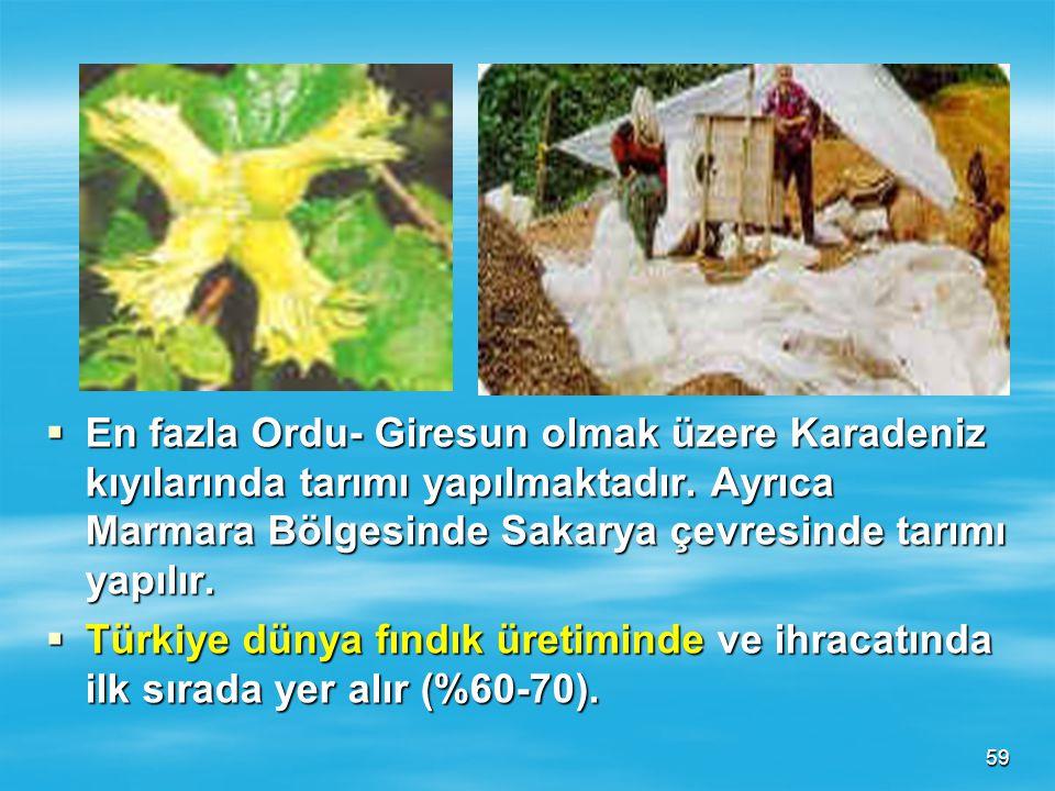 En fazla Ordu- Giresun olmak üzere Karadeniz kıyılarında tarımı yapılmaktadır. Ayrıca Marmara Bölgesinde Sakarya çevresinde tarımı yapılır.