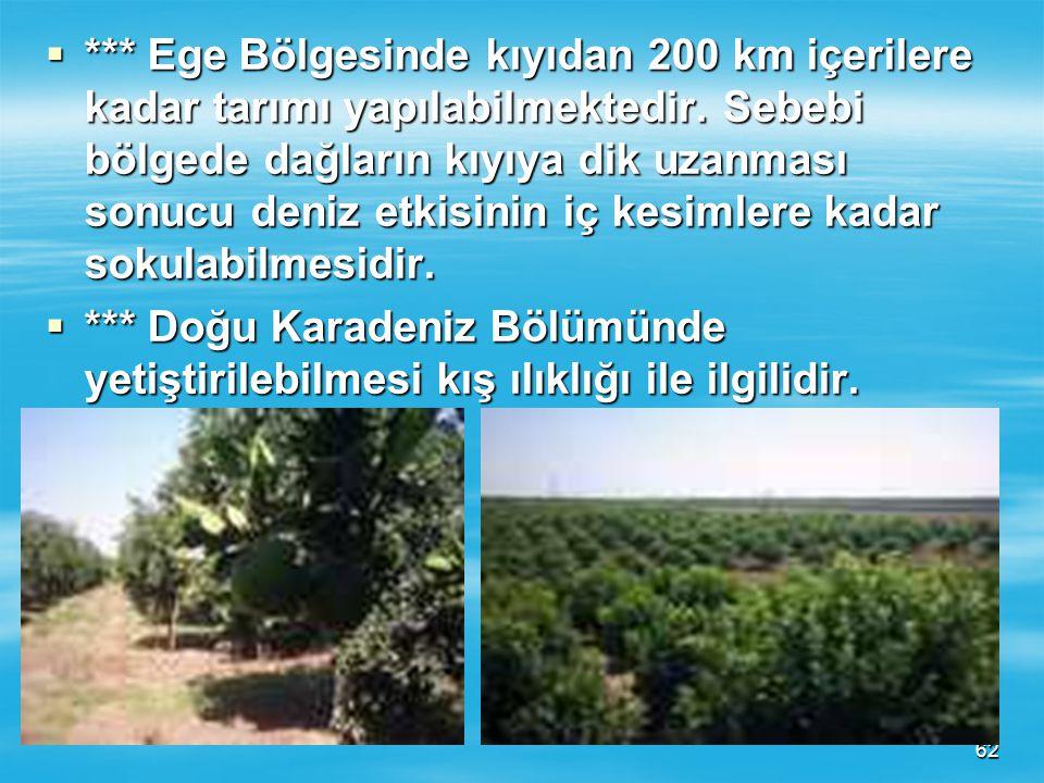 Ege Bölgesinde kıyıdan 200 km içerilere kadar tarımı yapılabilmektedir