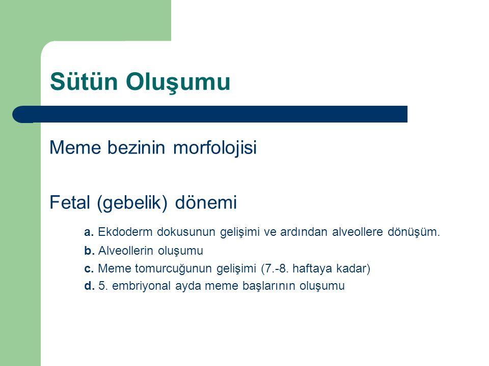 Sütün Oluşumu Meme bezinin morfolojisi Fetal (gebelik) dönemi