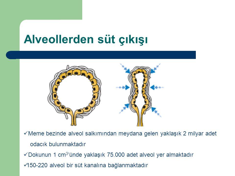 Alveollerden süt çıkışı