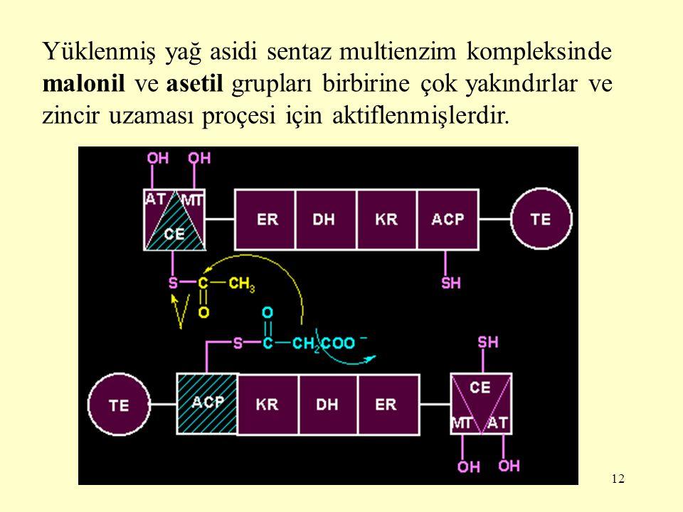 Yüklenmiş yağ asidi sentaz multienzim kompleksinde malonil ve asetil grupları birbirine çok yakındırlar ve zincir uzaması proçesi için aktiflenmişlerdir.