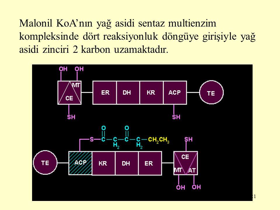 Malonil KoA'nın yağ asidi sentaz multienzim kompleksinde dört reaksiyonluk döngüye girişiyle yağ asidi zinciri 2 karbon uzamaktadır.