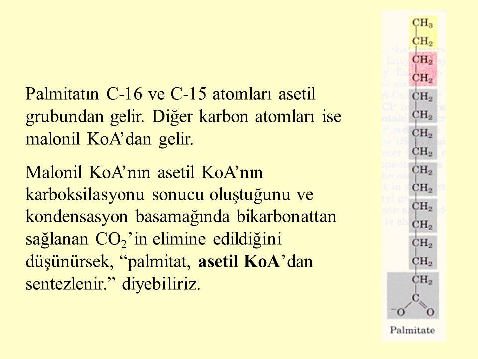 Palmitatın C-16 ve C-15 atomları asetil grubundan gelir