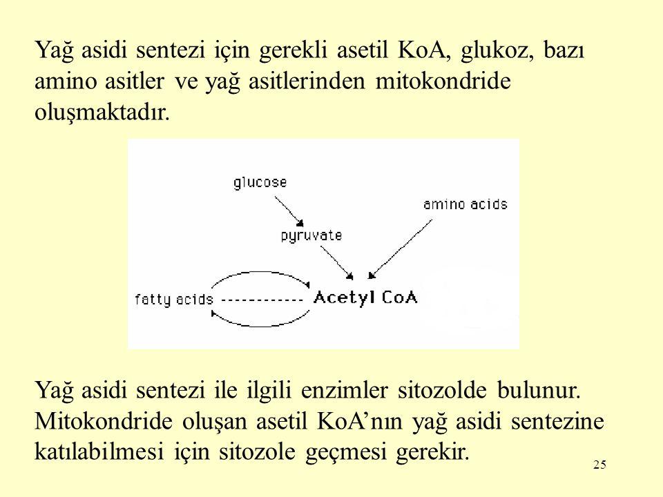 Yağ asidi sentezi için gerekli asetil KoA, glukoz, bazı amino asitler ve yağ asitlerinden mitokondride oluşmaktadır.