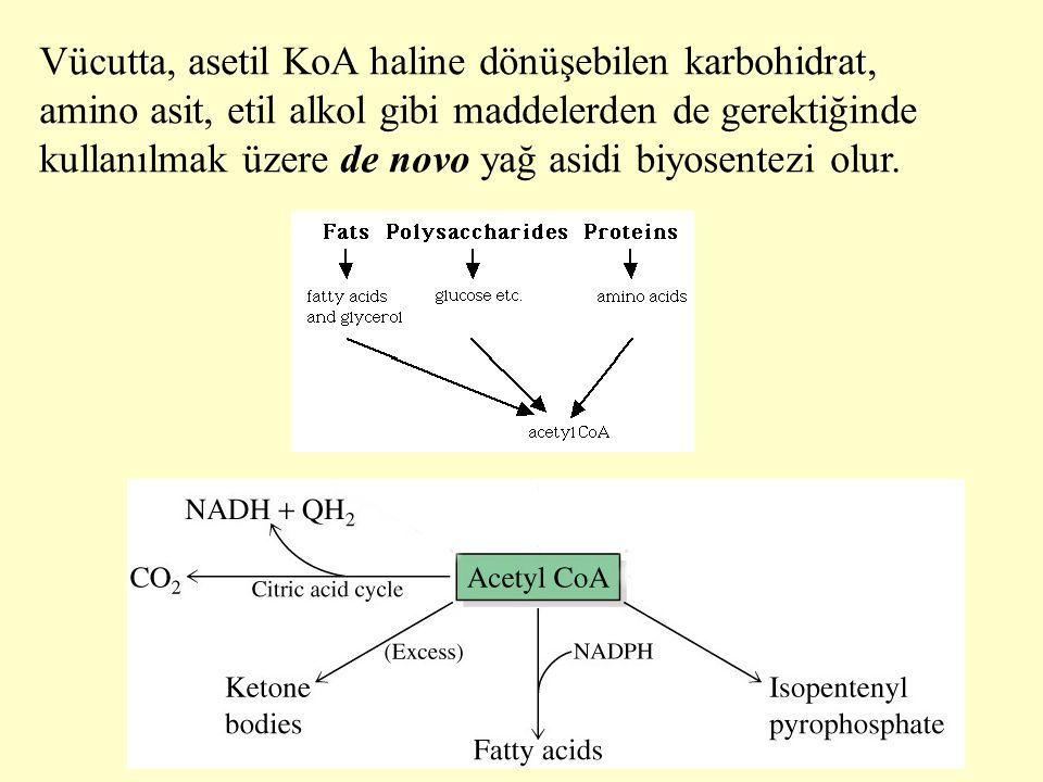 Vücutta, asetil KoA haline dönüşebilen karbohidrat, amino asit, etil alkol gibi maddelerden de gerektiğinde kullanılmak üzere de novo yağ asidi biyosentezi olur.