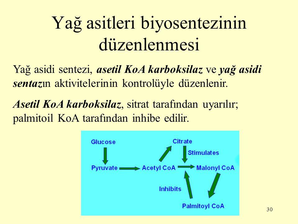 Yağ asitleri biyosentezinin düzenlenmesi
