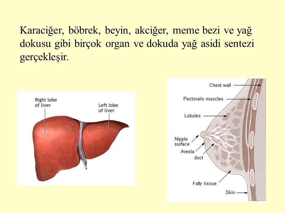 Karaciğer, böbrek, beyin, akciğer, meme bezi ve yağ dokusu gibi birçok organ ve dokuda yağ asidi sentezi gerçekleşir.