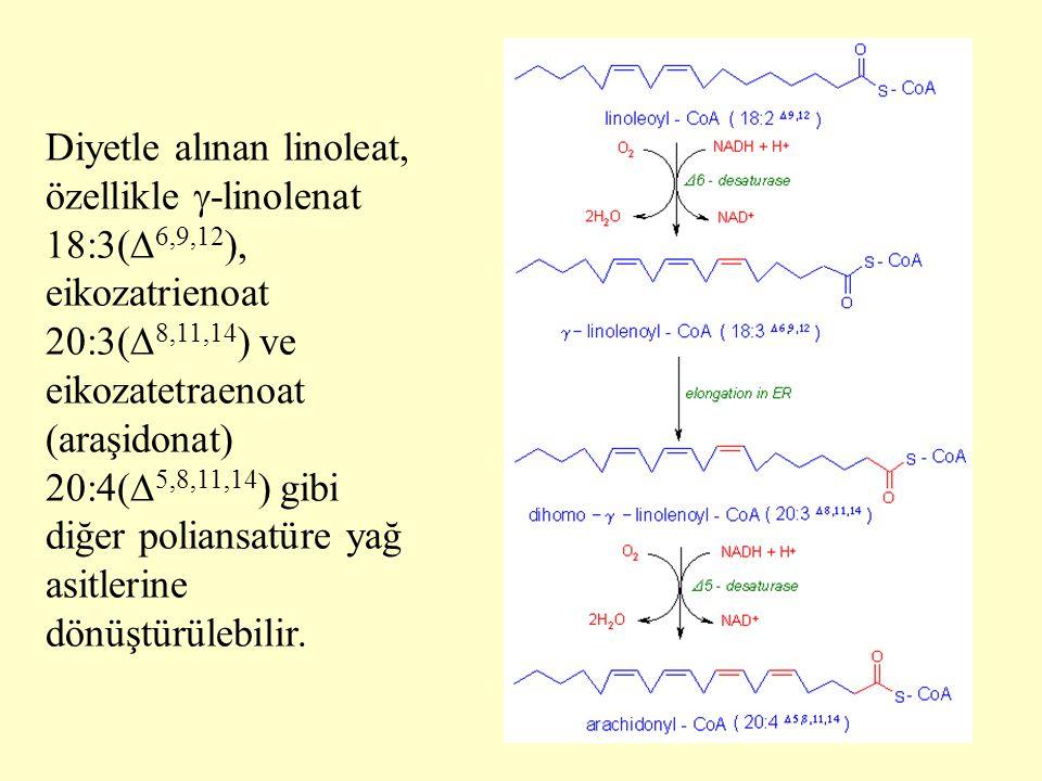 Diyetle alınan linoleat, özellikle -linolenat 18:3(6,9,12), eikozatrienoat 20:3(8,11,14) ve eikozatetraenoat (araşidonat) 20:4(5,8,11,14) gibi diğer poliansatüre yağ asitlerine dönüştürülebilir.
