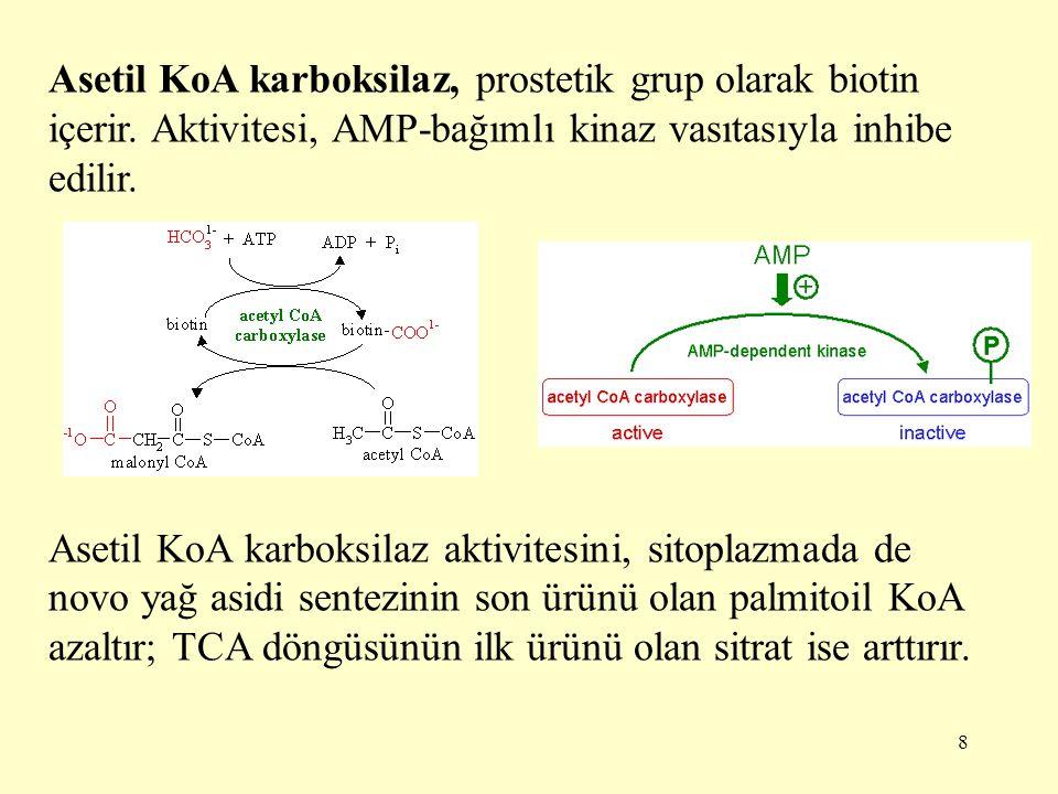 Asetil KoA karboksilaz, prostetik grup olarak biotin içerir