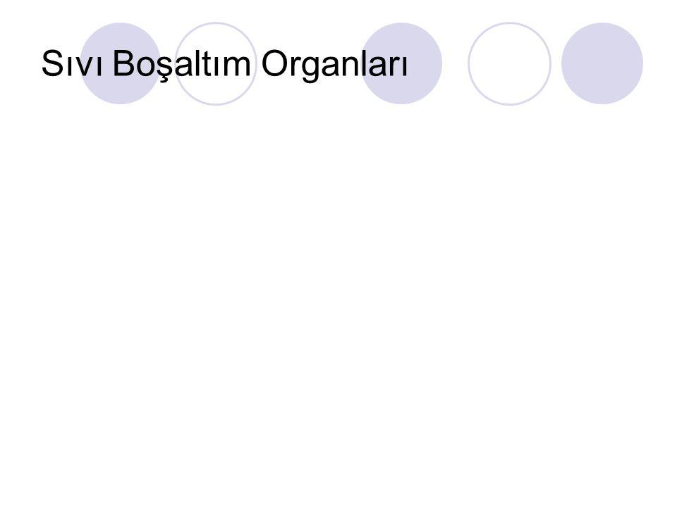 Sıvı Boşaltım Organları