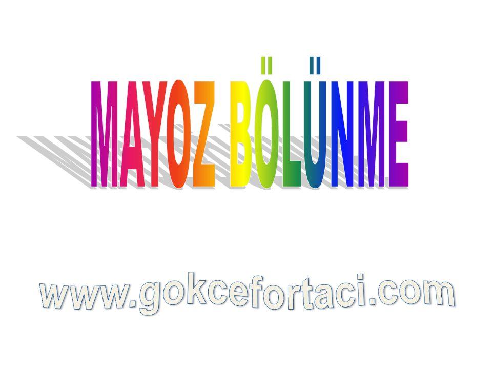MAYOZ BÖLÜNME www.gokcefortaci.com