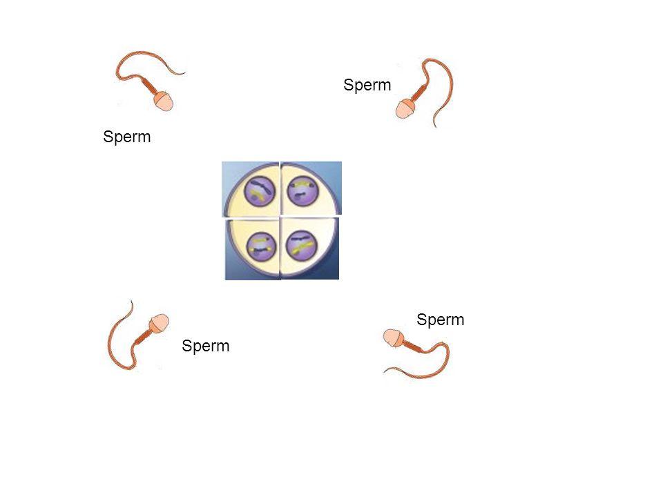 Sperm Sperm Sperm Sperm