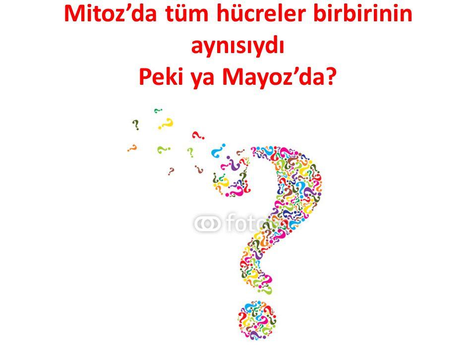Mitoz'da tüm hücreler birbirinin aynısıydı Peki ya Mayoz'da