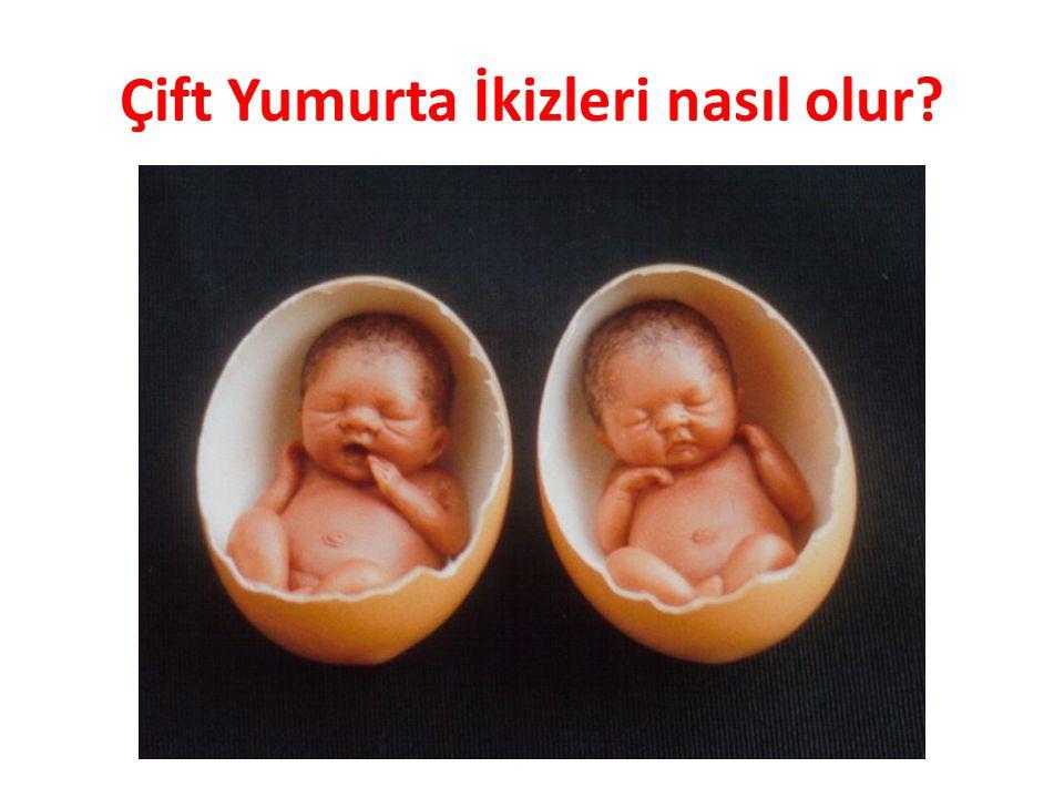 Çift Yumurta İkizleri nasıl olur