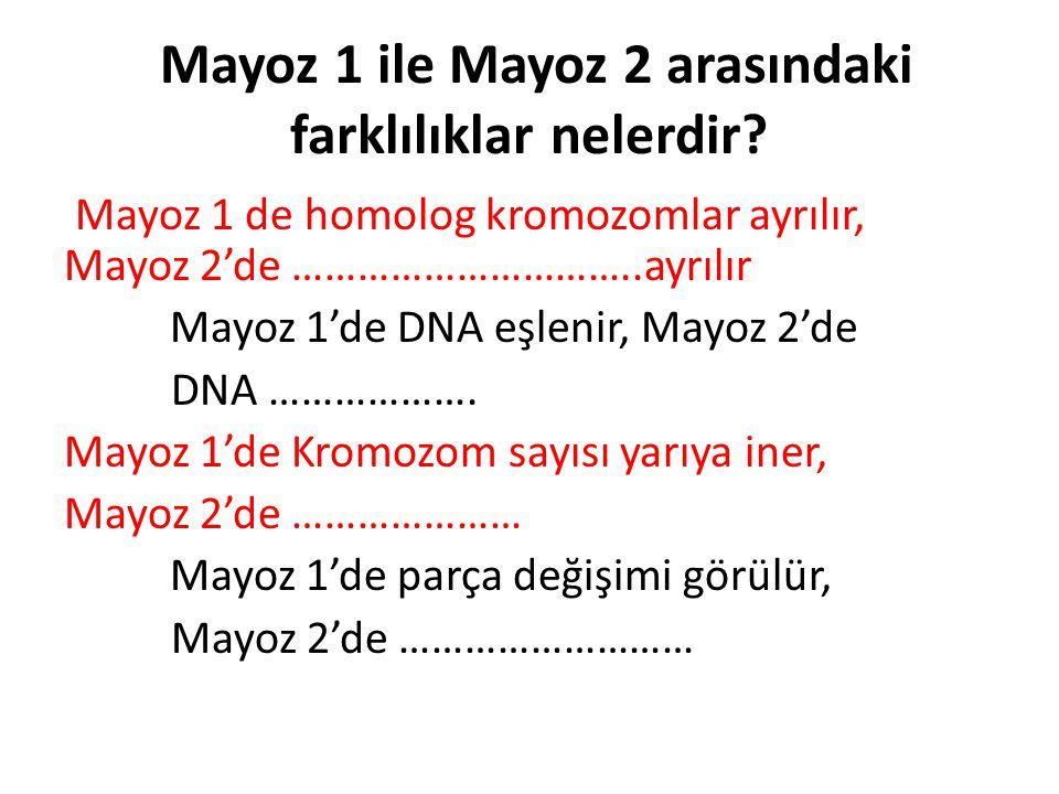 Mayoz 1 ile Mayoz 2 arasındaki farklılıklar nelerdir