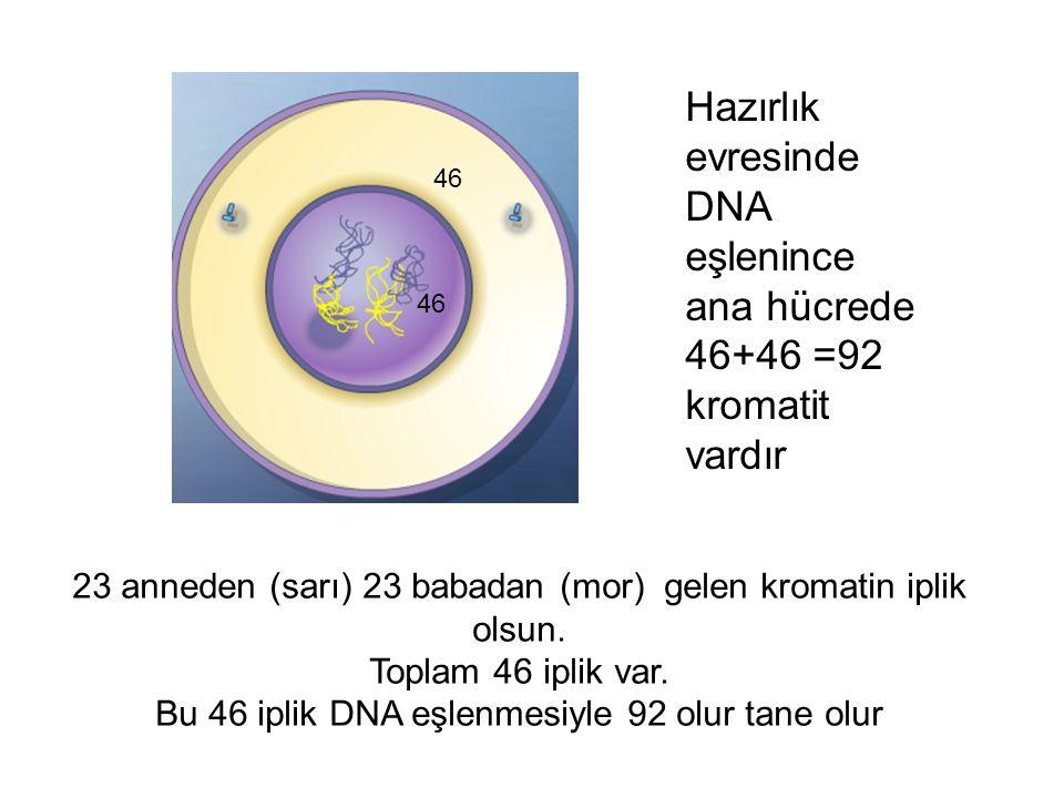 DNA eşlenince ana hücrede