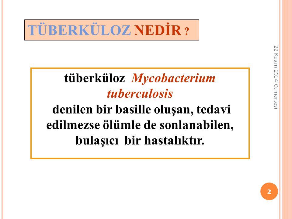 tüberküloz Mycobacterium tuberculosis