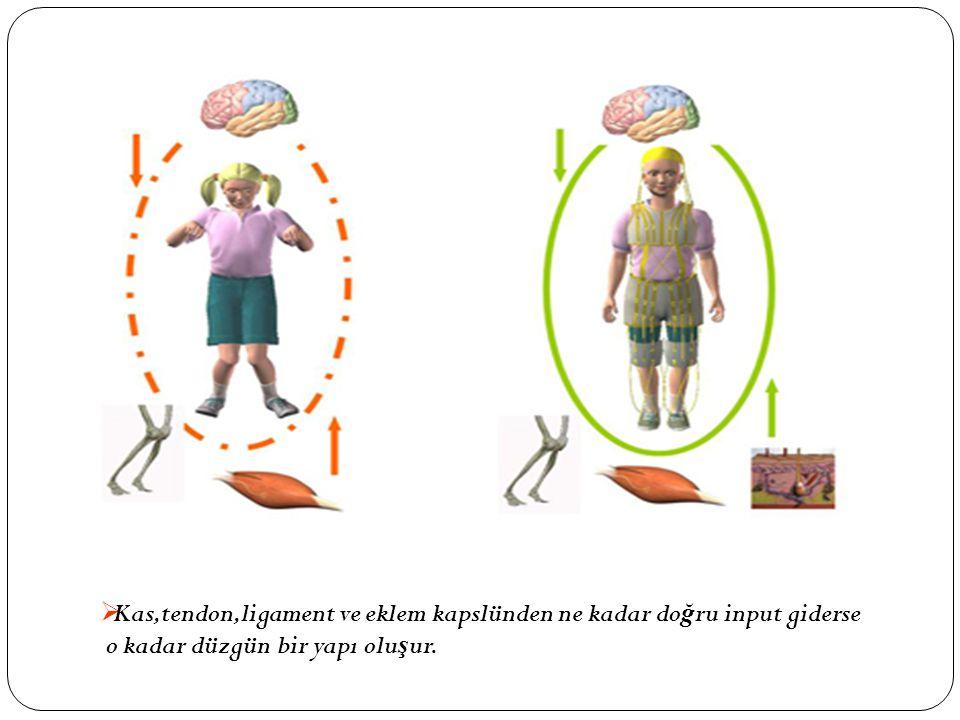 Kas,tendon,ligament ve eklem kapslünden ne kadar doğru input giderse