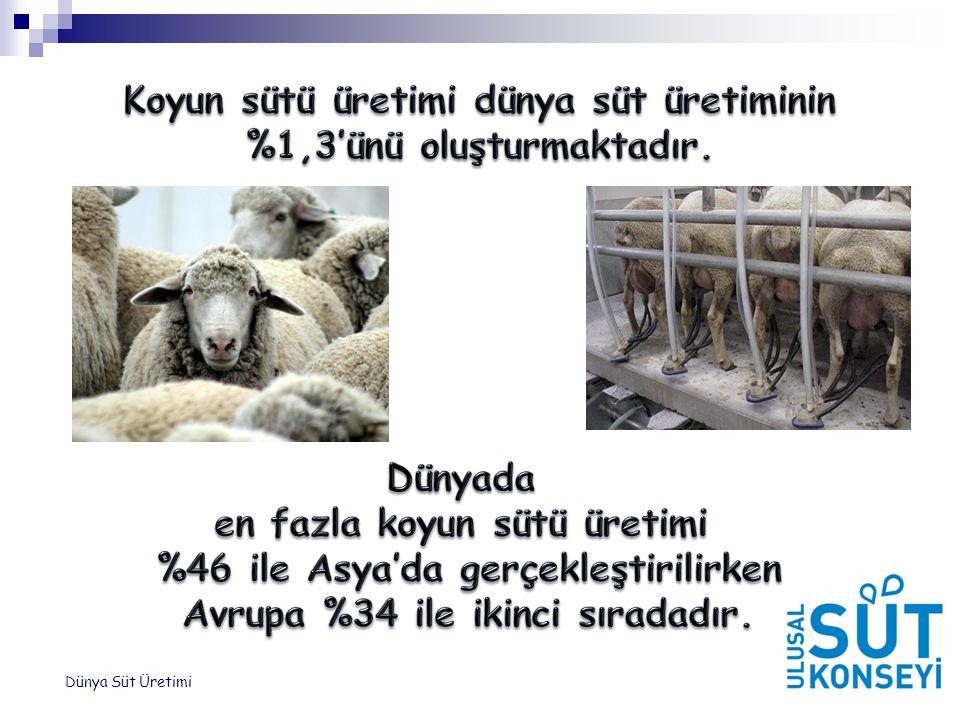 Koyun sütü üretimi dünya süt üretiminin %1,3'ünü oluşturmaktadır.