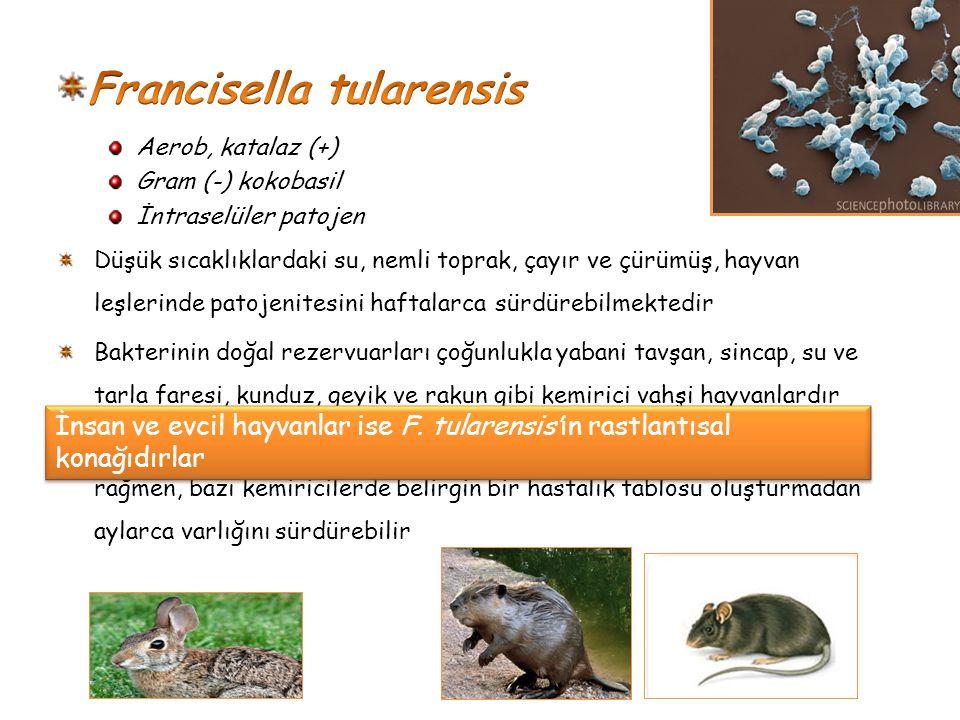 Francisella tularensis