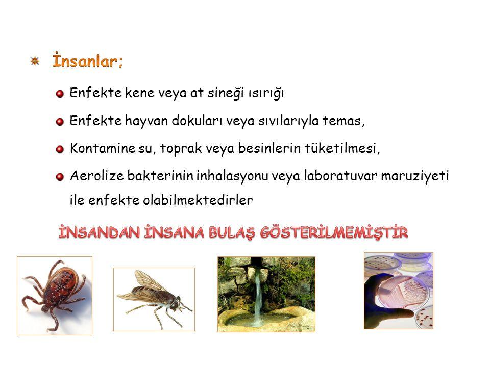 İnsanlar; Enfekte kene veya at sineği ısırığı