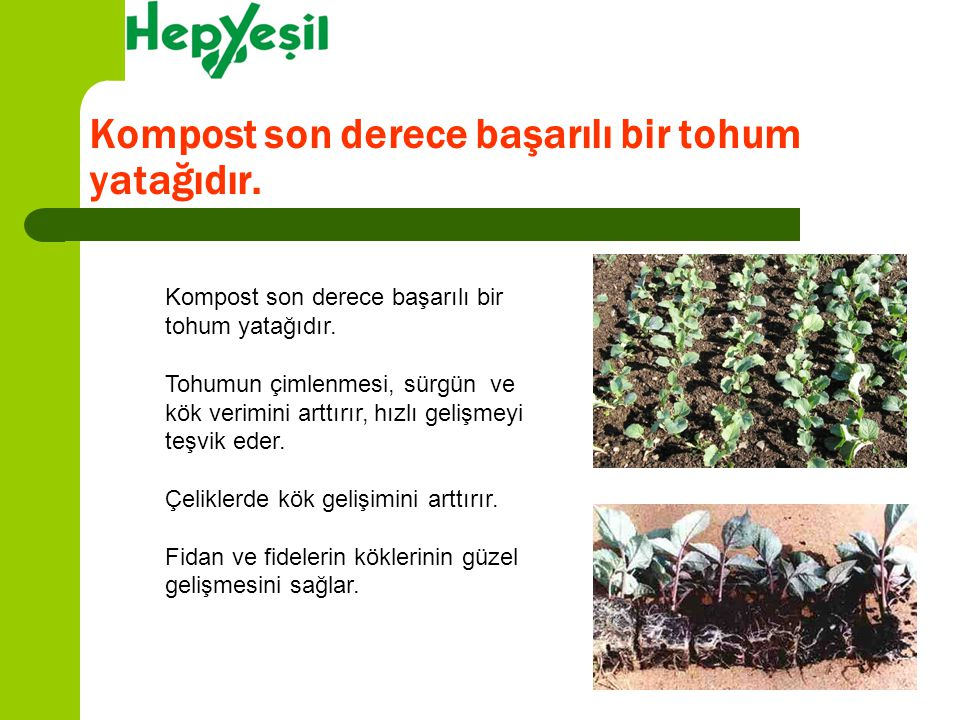 Kompost son derece başarılı bir tohum yatağıdır.