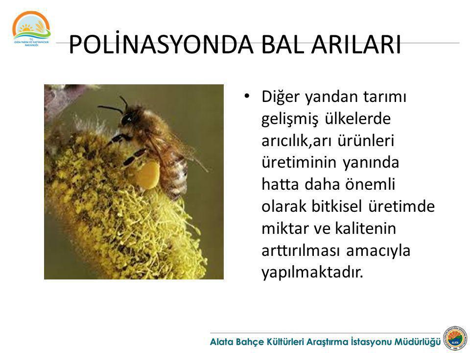 POLİNASYONDA BAL ARILARI