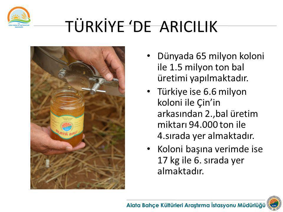 TÜRKİYE 'DE ARICILIK Dünyada 65 milyon koloni ile 1.5 milyon ton bal üretimi yapılmaktadır.