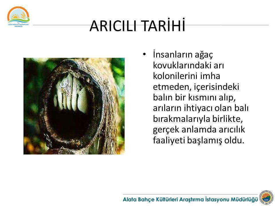 ARICILI TARİHİ