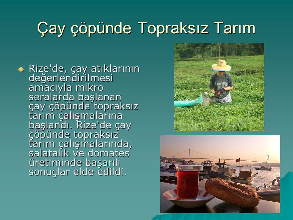 Çay çöpünde Topraksız Tarım