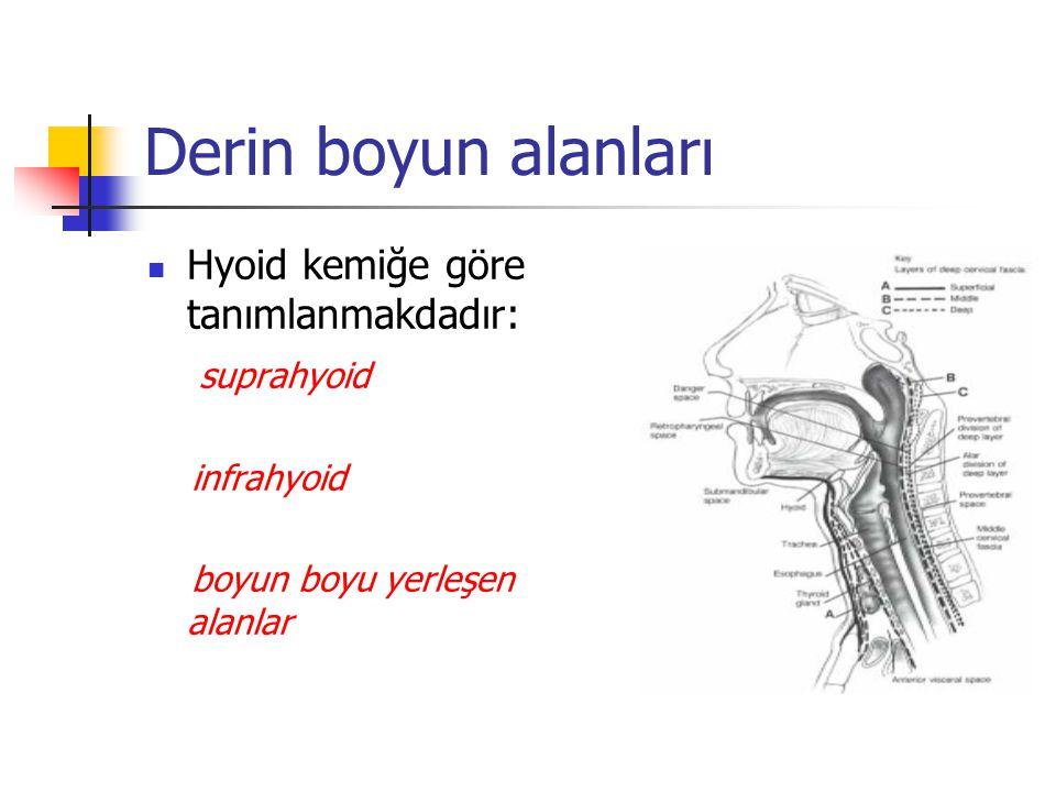 Derin boyun alanları Hyoid kemiğe göre tanımlanmakdadır: suprahyoid