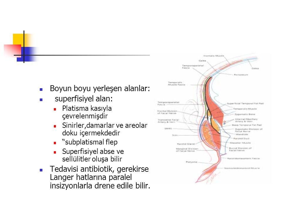 Boyun boyu yerleşen alanlar: superfisiyel alan: