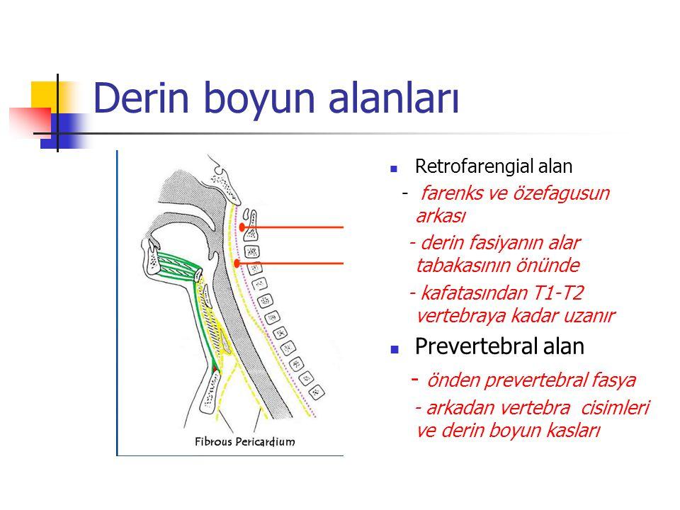 Derin boyun alanları Prevertebral alan - önden prevertebral fasya