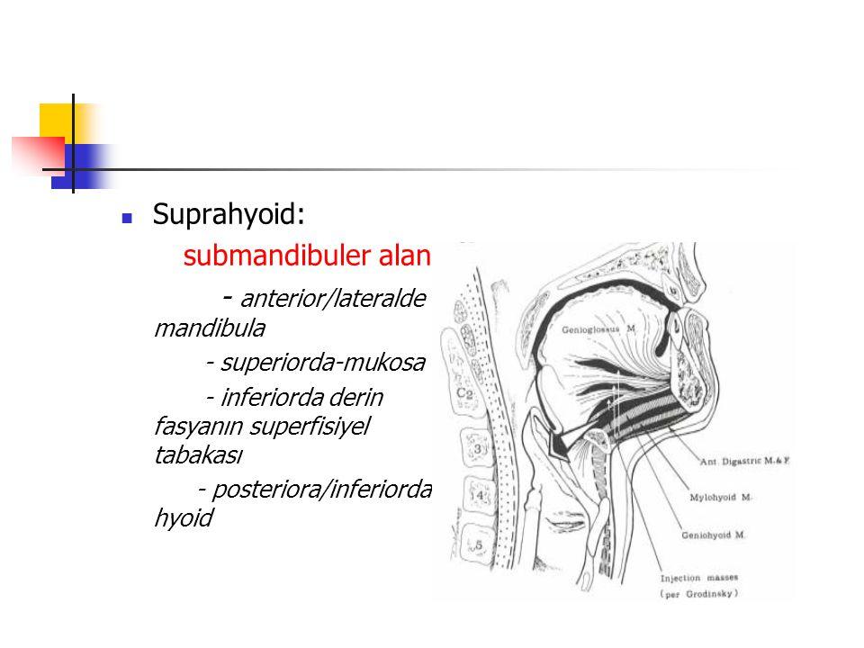 - anterior/lateralde mandibula