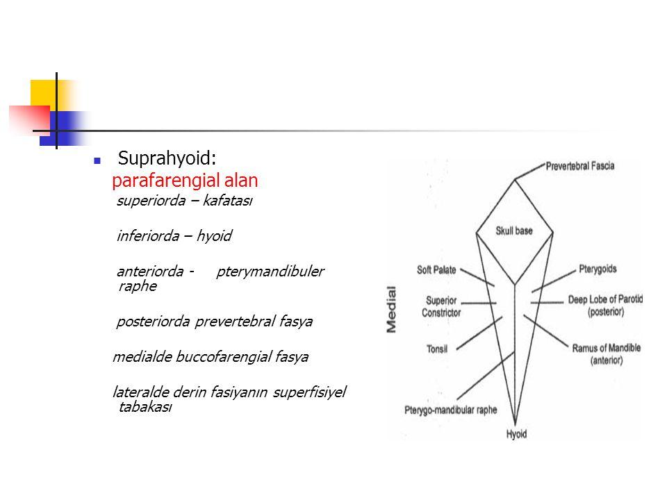 Suprahyoid: parafarengial alan superiorda – kafatası