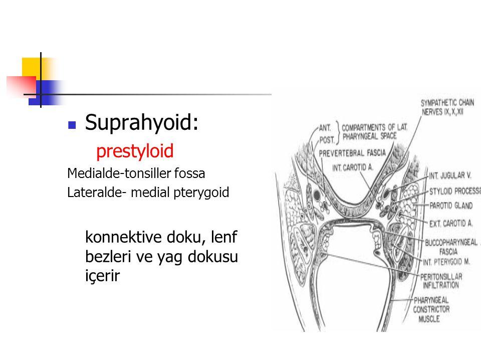 Suprahyoid: prestyloid