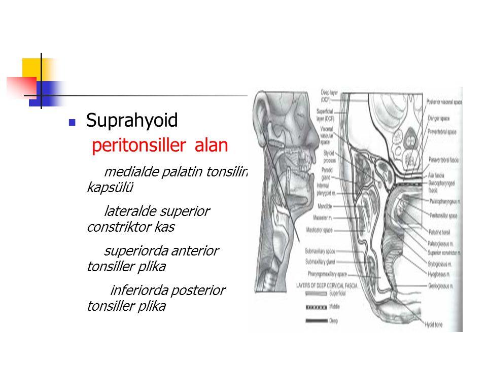 Suprahyoid peritonsiller alan. medialde palatin tonsilin kapsülü. lateralde superior constriktor kas.