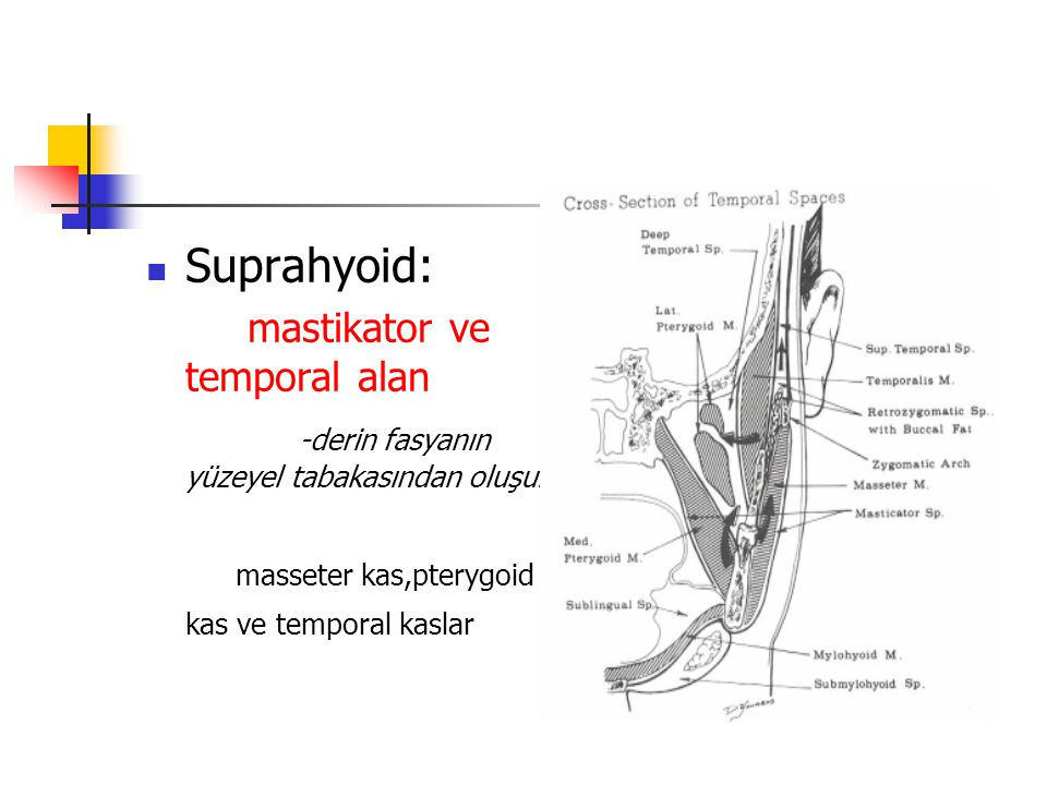 Suprahyoid: mastikator ve temporal alan